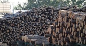 Начало года для латвийской деревообрабатывающей промышленности сложилось довольно удачно. Фото: smartlatvia.lv