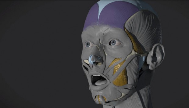 anatomy next screen_opt